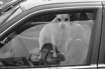 a-dog-in-a-car-in-a-parking-lot