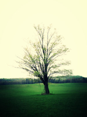 the-dreaming-tree