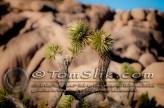 Joshua Tree Astro-Photograpy 11-2-2013 0225