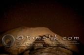Joshua Tree Astro-Photograpy 11-2-2013 0441