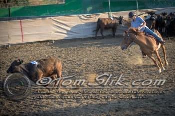 Lynn & Sam Team Cow Sorting 5-18-2016 0021