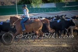 Lynn & Sam Team Cow Sorting 5-18-2016 0028