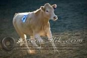 Lynn & Sam Team Cow Sorting 5-18-2016 0044