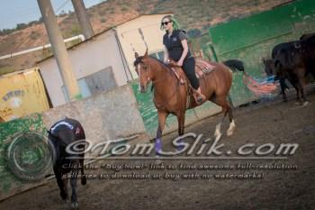 Lynn & Sam Team Cow Sorting 5-18-2016 0196