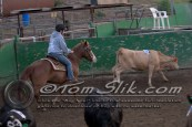 Lynn & Sam Team Cow Sorting 5-18-2016 0224