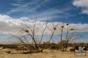 Tierra Del Sol Desert Safari 2018 0610