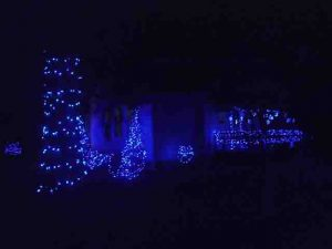 Picture of Blue LED Outdoor Christmas Lights, House Front South West, showing bushes, spruce trees, and porch railing adorned with glowing LED strings.