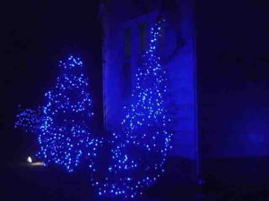 Picture of Blue Outdoor LED Christmas Lights, house front bushes decorated.