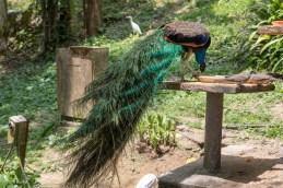 Birds_1335