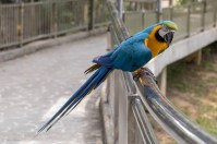 Birds_1421