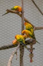 Birds__R8A1408