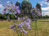 Flowers in front of Berlin Cathedral