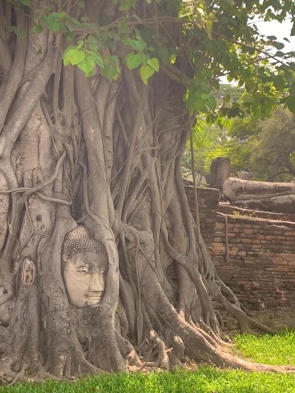 ワットマハタートの木に埋もれた仏頭