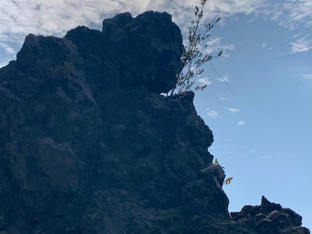 桜島の西郷岩