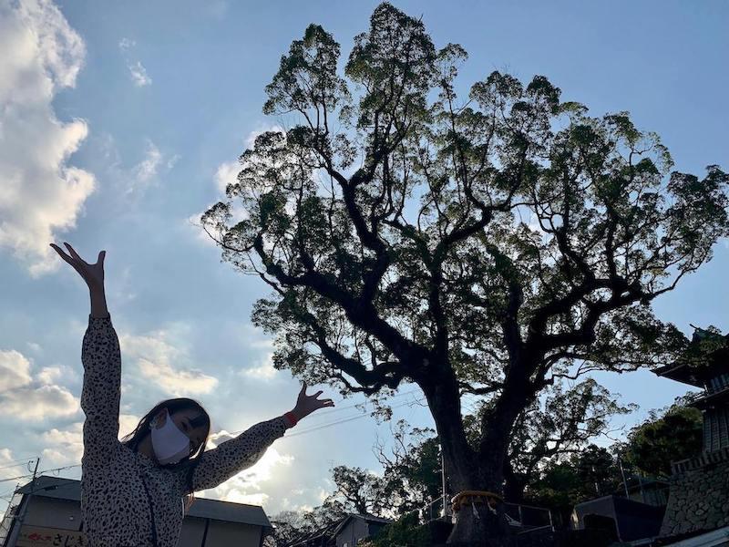 鎮西大社 諏訪神社の大きな木