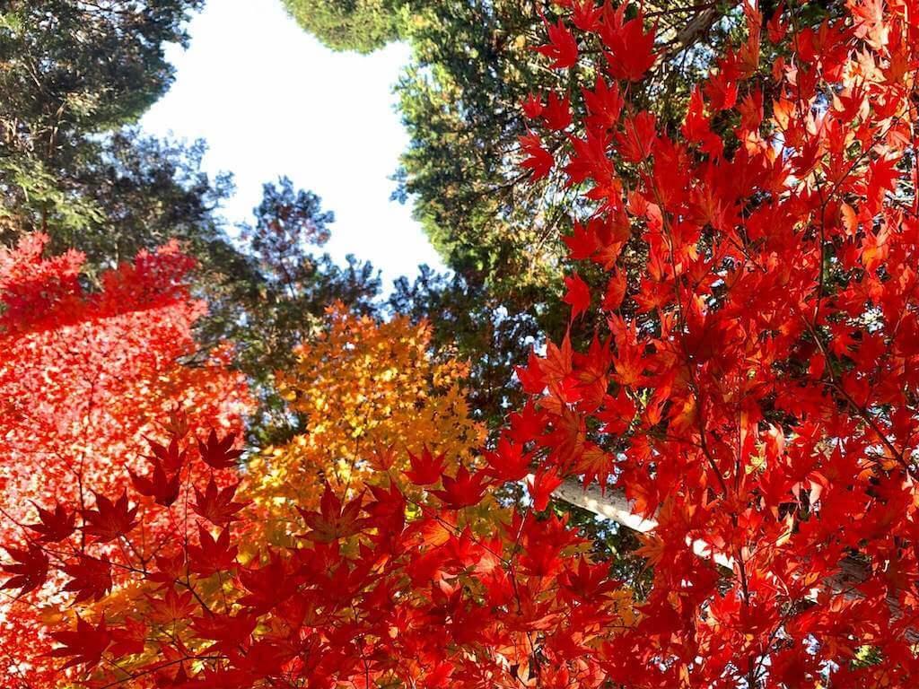 信楽の日雲神社の紅葉