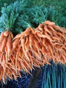 Carrots_Sp2015