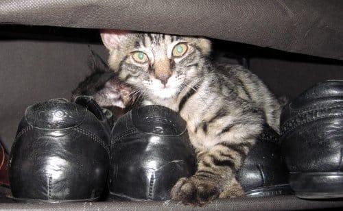 猫-雑貨-輸入