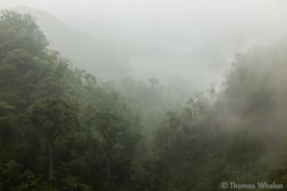 Rainforest mists