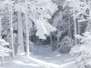 žiemos eilės
