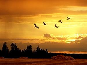 išskrenda paukščiai