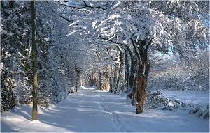 žiemos daina