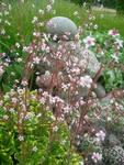 gėlės_žemaitijoj