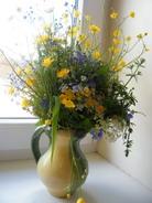 laukinės gėlės Agnusyte2010