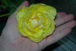 gėlė_rankoje
