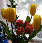 gėlės_Agnusyte