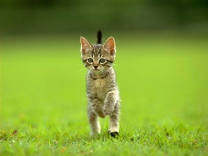 katinelis