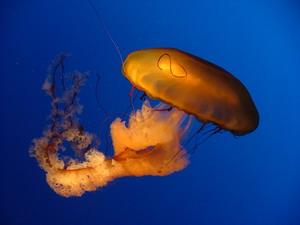 medūza