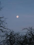 mėnulis_Agnusyte2009gruodis