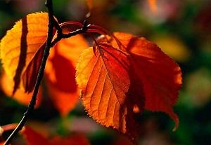 rudenį