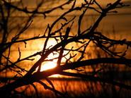 saulėlydis_Agnusyte2009