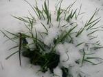 sniegutis_Agnusyte_foto