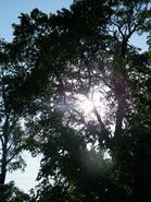 šviesa_Agnusyte2009foto