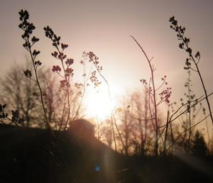 šviesa_Agnusyte2010foto