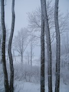 žiema_Agnusyte2010