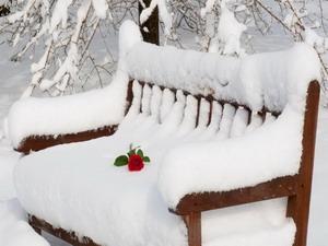 žiemos grožis