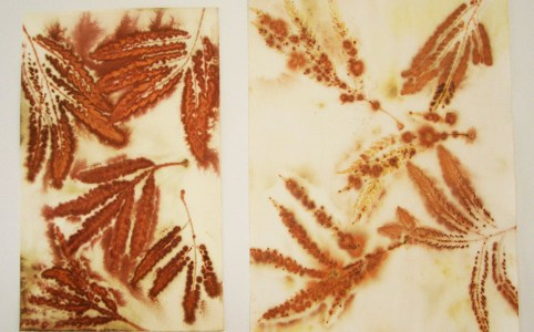 Leaf Print Test - Paper