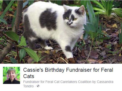 Cassandra Tondro feral cats fundraising