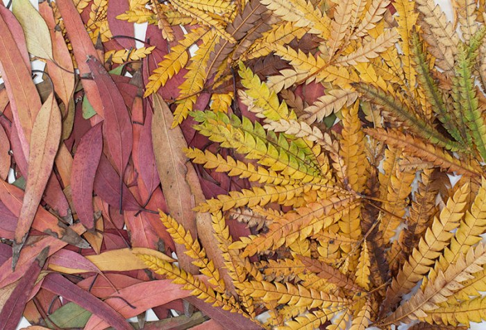 Natural Dyes leaves
