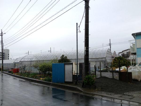 鈴木農園のいちご狩りビニールハウス