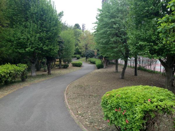 津久井又野公園の散策路