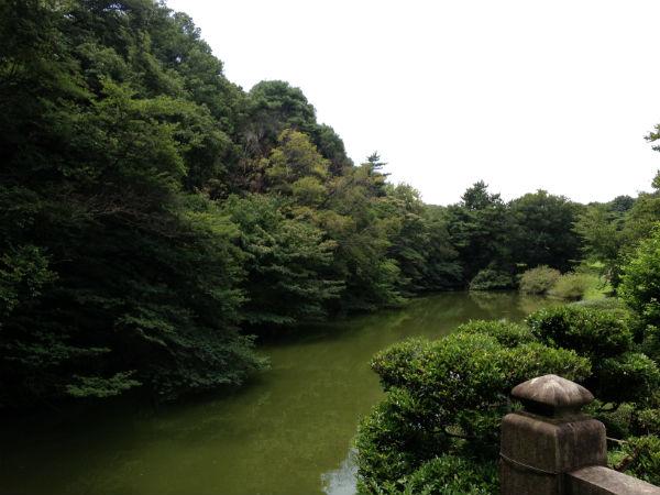 明治神宮の北池