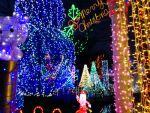 宮ケ瀬のジャンボクリスマスツリーを見に行ってきた!12月25日まで!