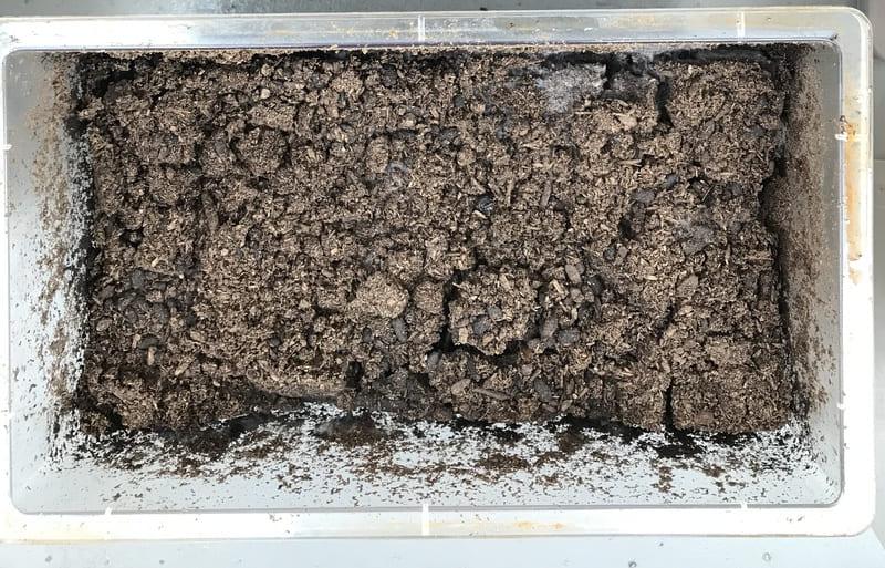 カブトムシの幼虫の冬眠と飼育方法