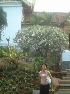 ดอกไม้สีขาวด้านหลังหอมมาก