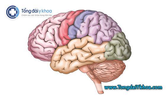 Não là trung tâm điều khiển của hệ thần kinh trung ương